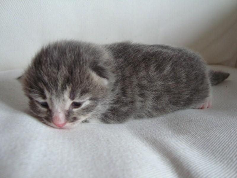 Det här är Mini Sigrid! :)