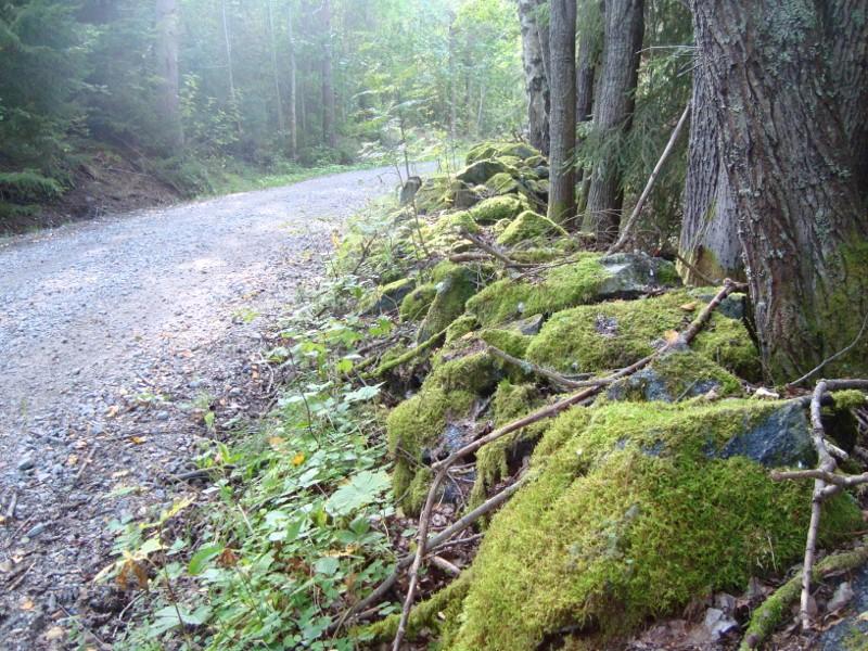 Vacker skogsväg
