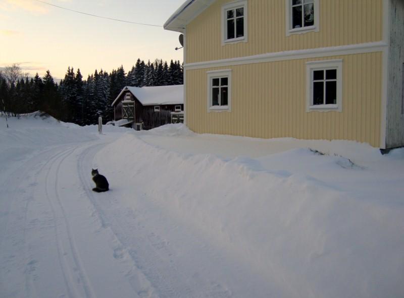 Det har varit ganska kallt också så våra katter har busat i snön och sprungit ut och in mellan huset och stallet.
