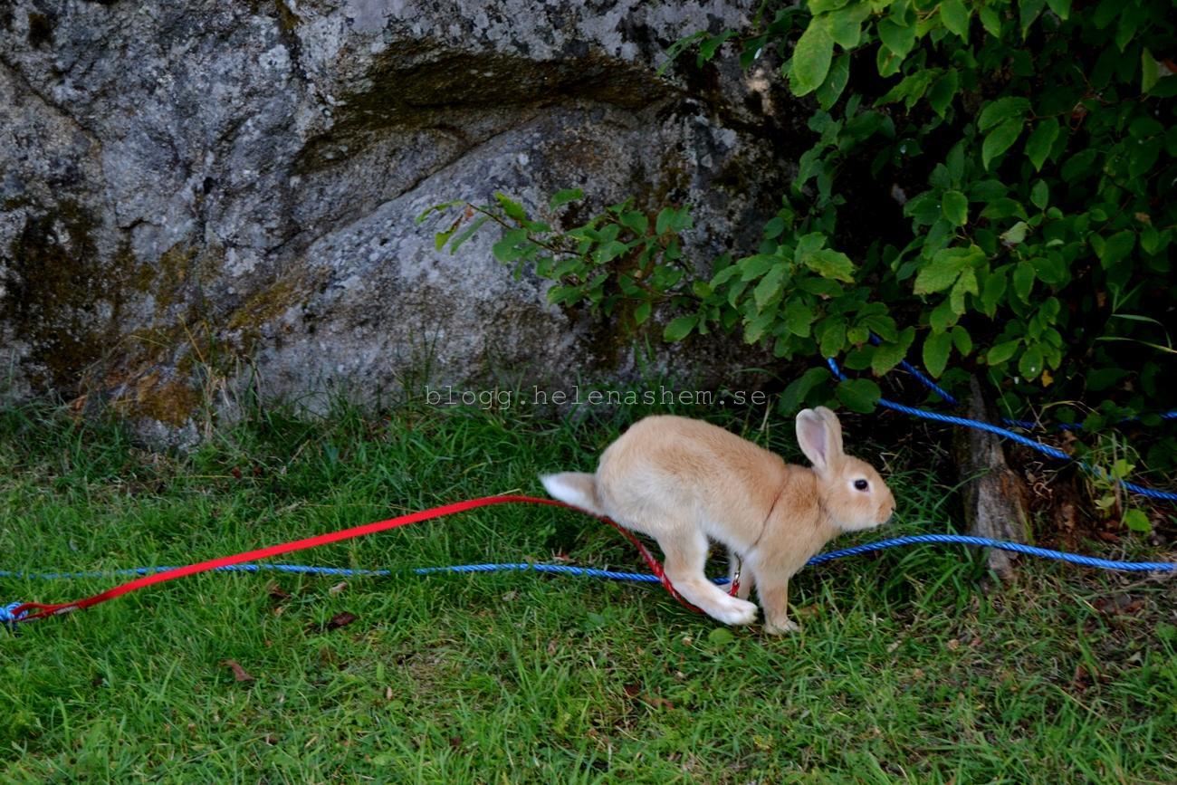 En glad kanin som springer fort