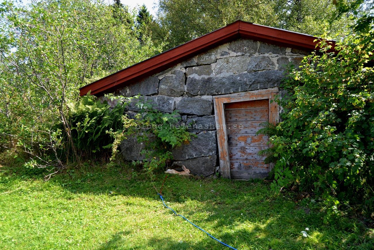 Söta Knut myser i skuggan framför jordkällaren på vår gård