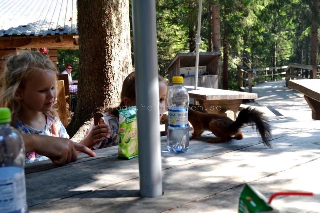 ...en Ekorre som ville äta vår mat! :)