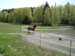 På vägen går man förbi många hästhagar