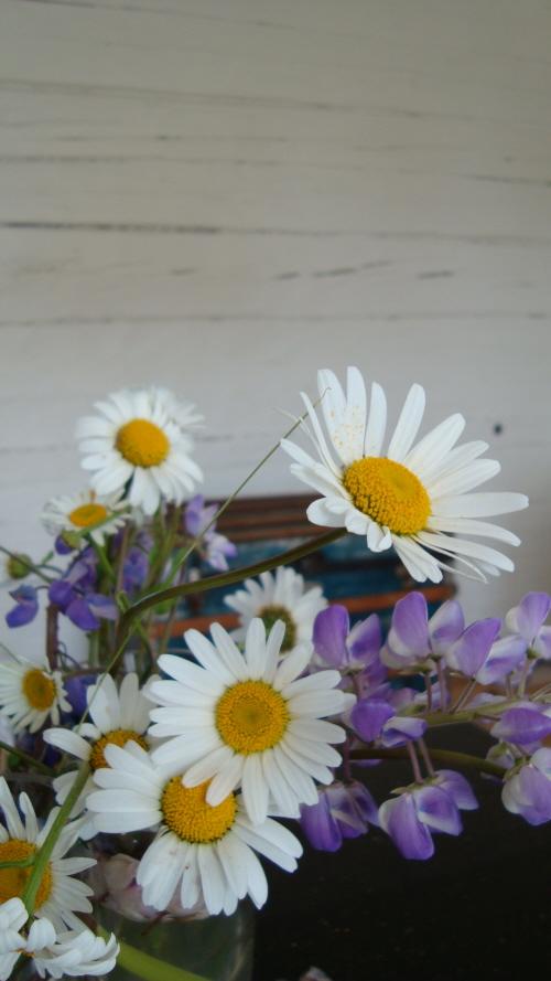 Vilda sommarblommor i vårt kök